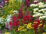 Cottage Garden Seeds Collection- 10pkts- 1000's of seeds